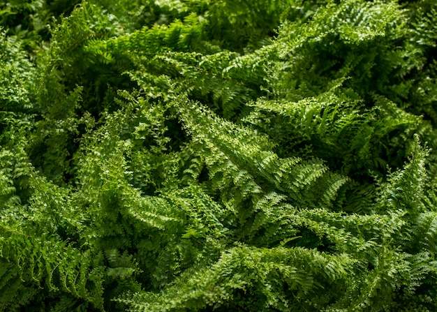 Fundo verde jovem samambaia
