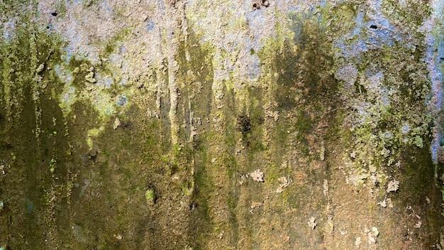 Fundo verde musgo na natureza