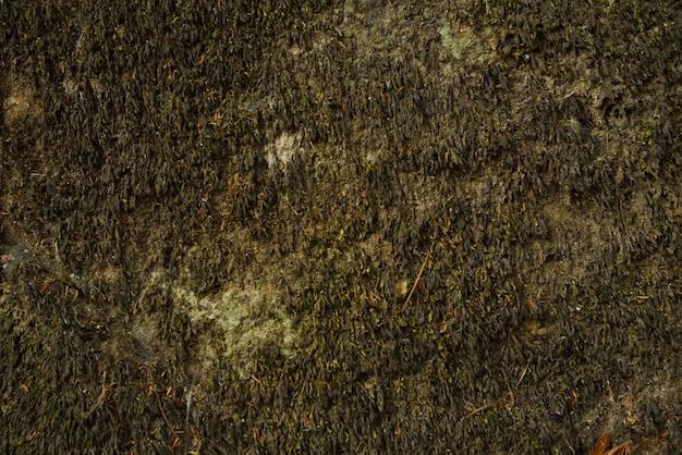 Fundo verde musgo