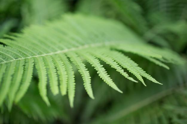 Fundo verde natural, cópia espaço