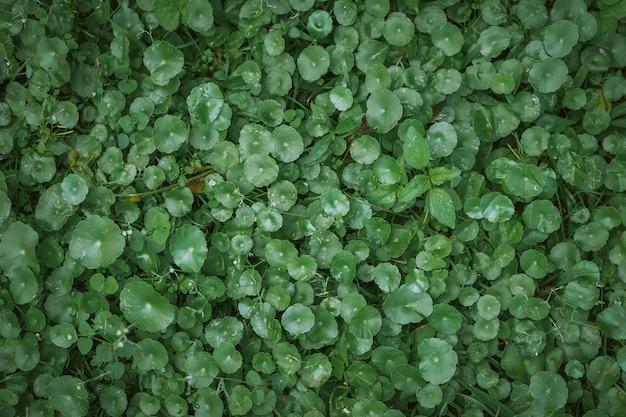 Fundo verde natural de folhas verdes