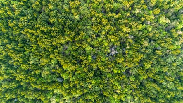 Fundo verde natural ou textura de árvores de floresta dos manguezais da câmera do zangão da parte superior em tailândia.