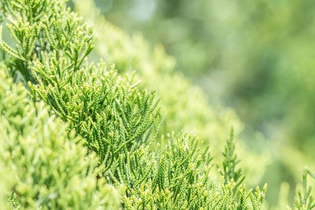Fundo verde natureza