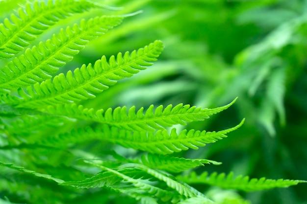 Fundo verde samambaia, folhas verdes frescas textura