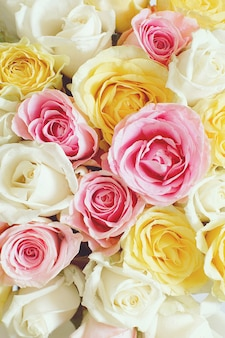 Fundo vertical com lindas rosas de cores diferentes.