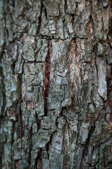 Fundo vertical da textura do relevo da casca marrom de uma árvore. papel de parede para dispositivo