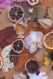 Fundo vintage com folhas secas, flores e fatias secas de toranja e laranja.