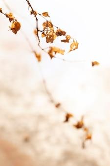 Fundo vintage de folhas secas