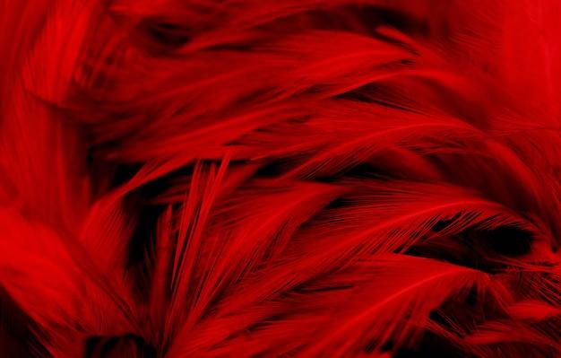 Fundo vintage de penas vermelhas escuras.