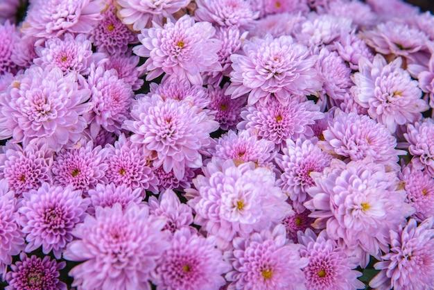 Fundo violeta da natureza da flor.