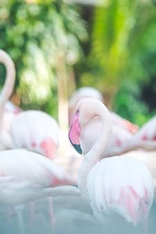 Fundos de flamingo natural, luz do sol da noite