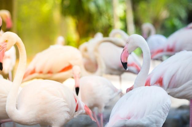 Fundos de flamingo natural