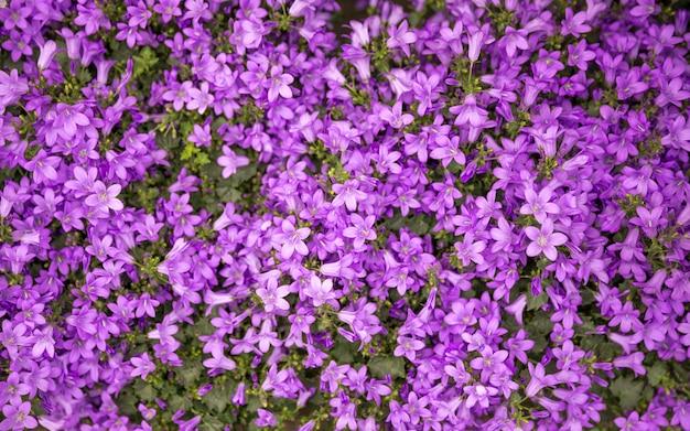 Fundos de flores, muitas flores frescas bonitas