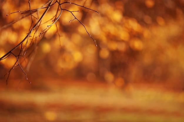 Fundos outonais abstratos para seu projeto. copie o espaço. brunches de outono sobre folhas douradas borradas. fundo de natureza outono com bokeh. queda de fundo desfocado.