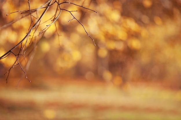 Fundos outonais abstratos para seu projeto. copie o espaço. brunches de outono sobre folhas douradas borradas.