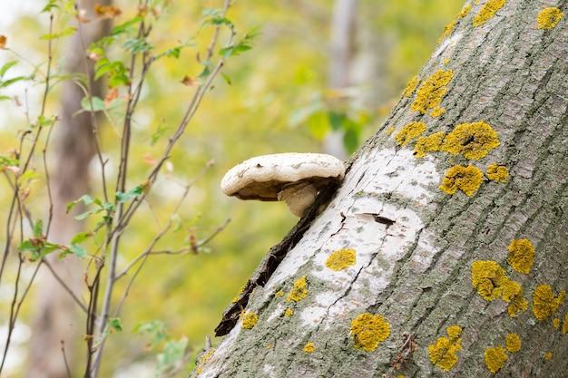 Fungo em uma árvore quebrada