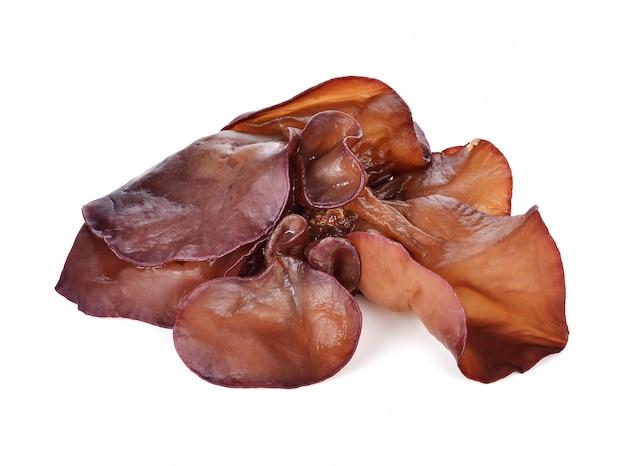 Fungo negro (cogumelo da orelha do judeu)