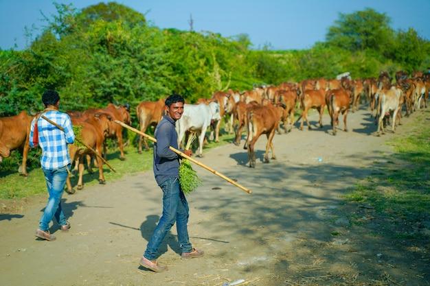Gado indiano ao ar livre