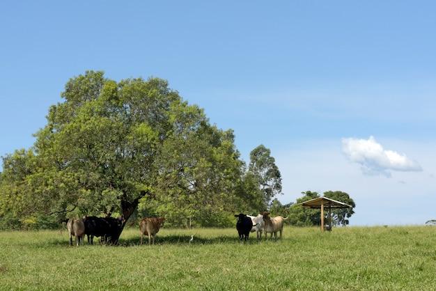 Gado no pasto de grama verde com árvores