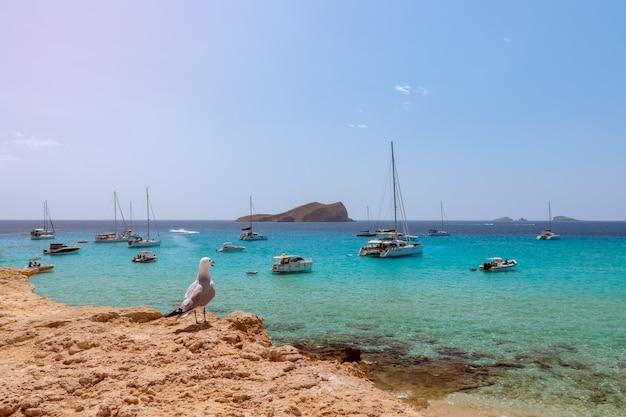 Gaivota admira uma bela vista de cala comte com barcos em ibiza, espanha