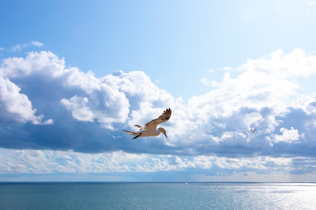 Gaivota branca voando no céu ensolarado e algumas nuvens fofas Foto gratuita