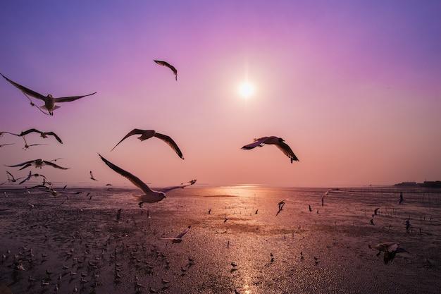 Gaivota com pôr do sol no mar em bangpu, tailândia