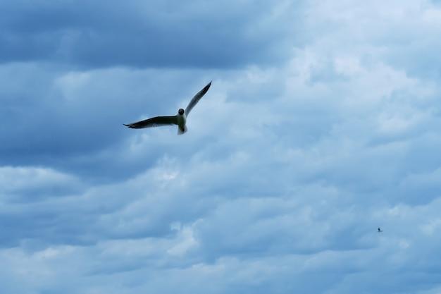 Gaivota contra um céu azul com nuvens