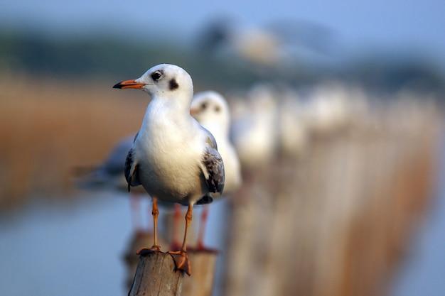 Gaivota em uma paisagem à beira-mar