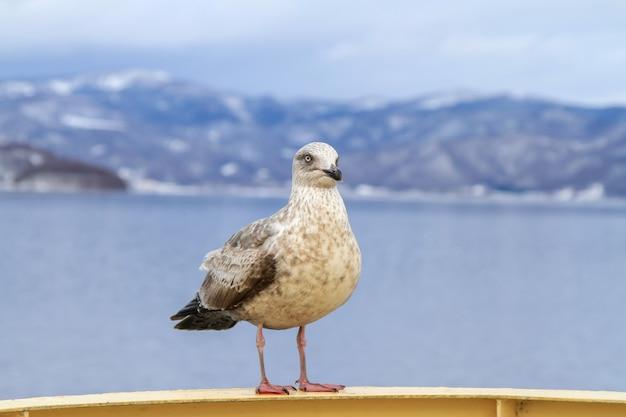 Gaivota empoleira-se em um corrimão de navio de cruzeiro em hokkaido e vista da montanha no inverno