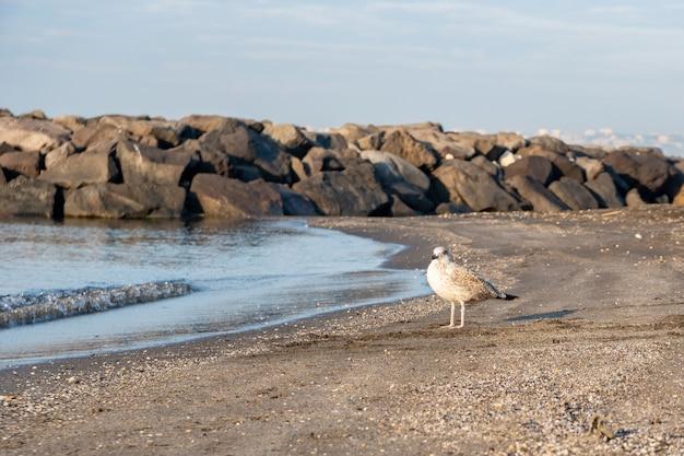Gaivota na costa arenosa do mar azul