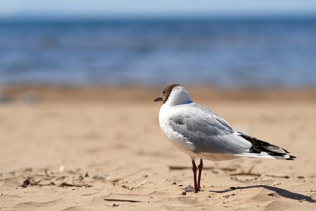Gaivota na praia à beira-mar.