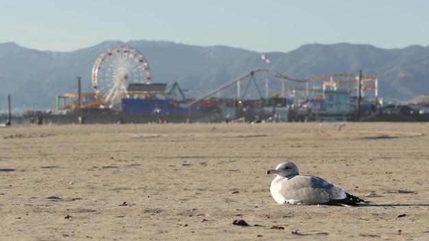Gaivota na praia ensolarada da califórnia