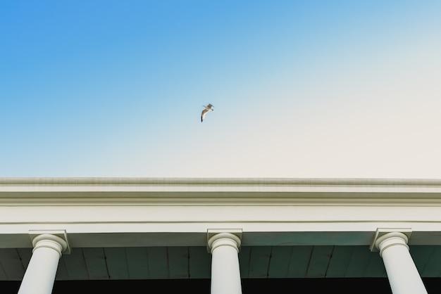 Gaivota que voa sobre um edifício velho com grandes colunas.