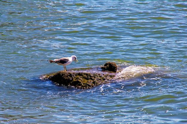 Gaivota sentada em pedra na água do mar