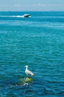Gaivota sentada na rocha em um barco de água do mar azul dirigindo-se à silhueta da cidade costeira à distância