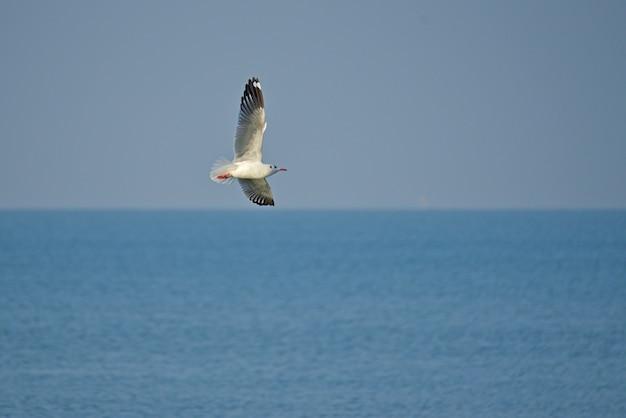 Gaivota solitária espalhou suas asas subindo para o céu sobre o oceano.