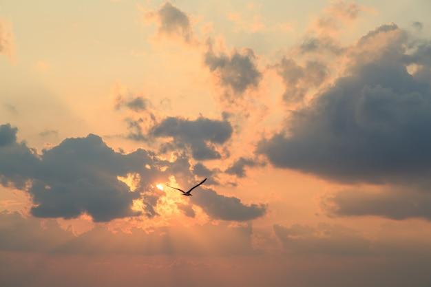 Gaivota voa contra nuvens ao pôr do sol