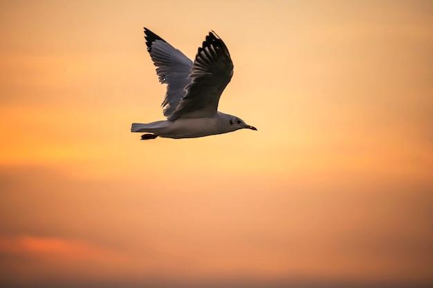 Gaivota voando ao pôr do sol com céu laranja crepuscular em bang pu, samut prakan, tailândia. animal selvagem Foto Premium