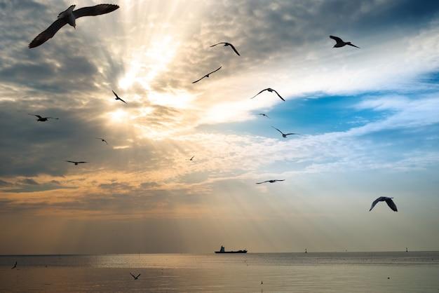 Gaivota voando com navio de guerra ao pôr do sol