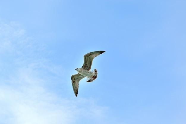 Gaivota voando em um céu sem nuvens