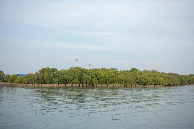 Gaivota voando na floresta de mangue sobre o mar