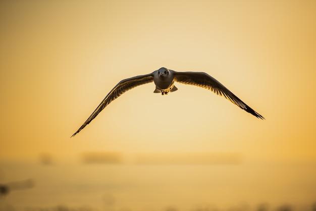 Gaivota voando no céu azul sobre o mar ao pôr do sol.