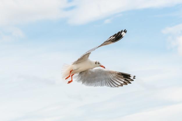 Gaivota voando no céu azul