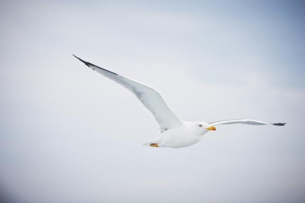 Gaivota voando no céu branco nublado