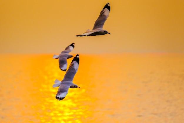 Gaivota voando no pôr do sol em bangpu, tailândia