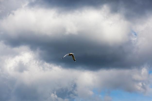 Gaivota voando sobre o lago no verão gaivota pássaro selvagem em busca de comida