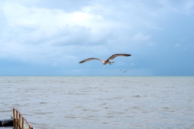 Gaivota voando sobre o mar negro e olhando para a câmera