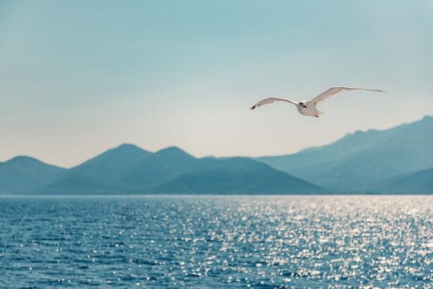 Gaivota voando sobre o mar