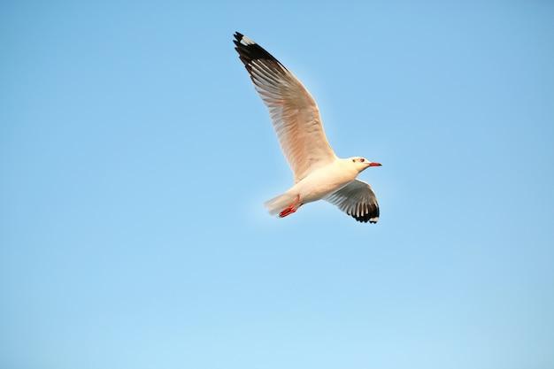 Gaivotas bonitas que voam no céu.