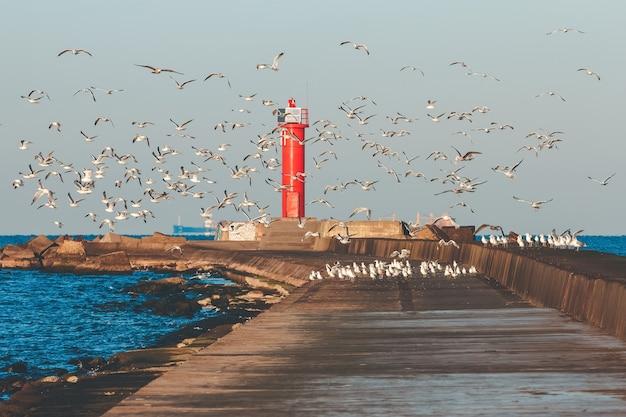 Gaivotas brancas voando contra o farol vermelho
